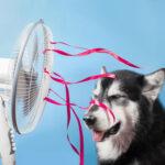 summer energy saving